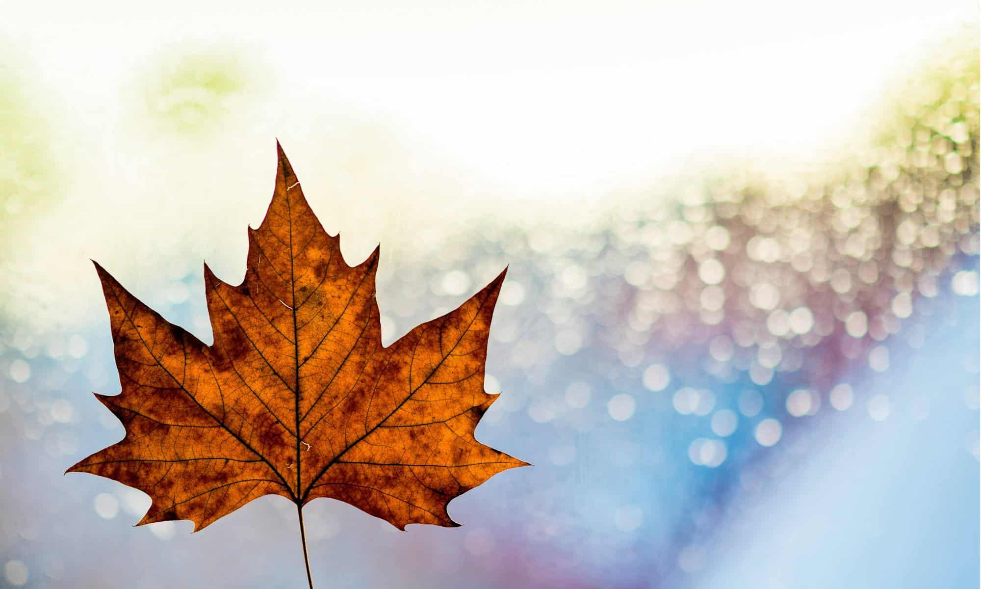 Formation commerciale avec stage rémunéré au Canada