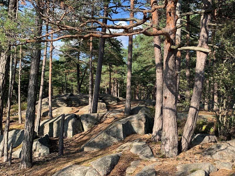 Norvège forêt