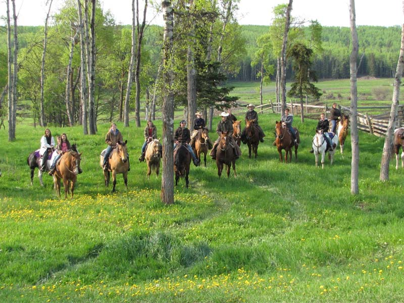 cheval au Canada