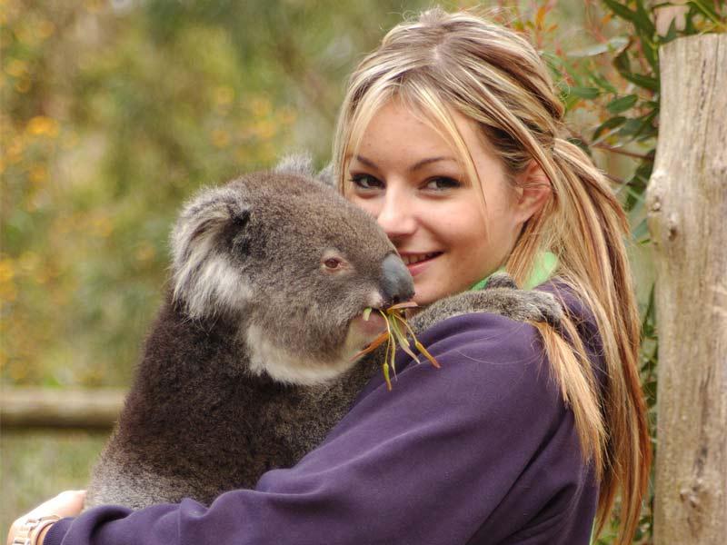sanctuaire de koala