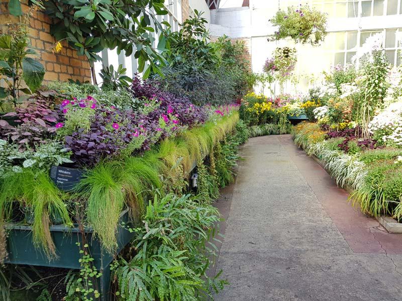 jardin des plantes Auckland