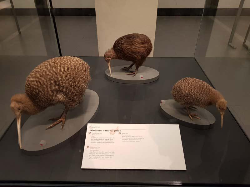 kiwi musée Auckland